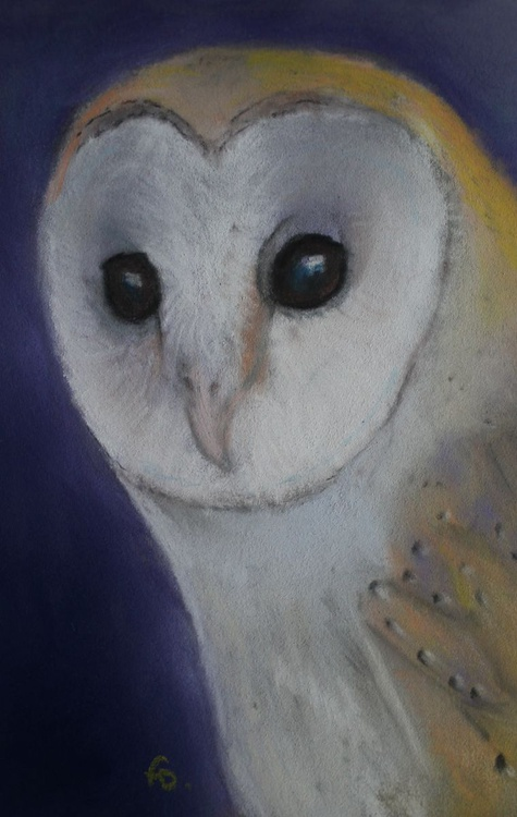 Small Barn Owl, framed pastel picture - Image 0