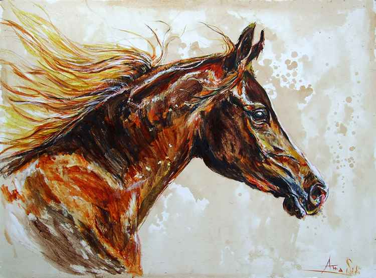 Free / Arabian Brown Horse -