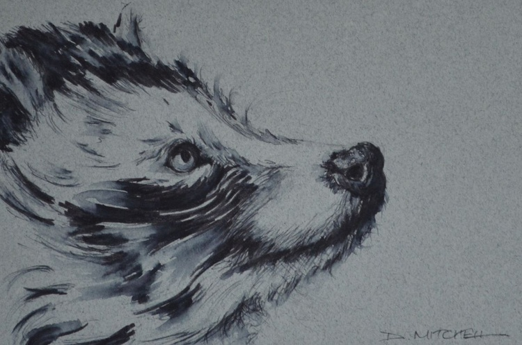 Racoon Dog Ink Sketch - Image 0