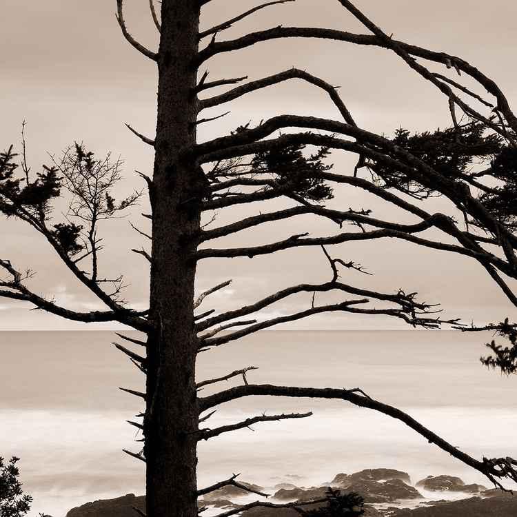 Whispering Pine -