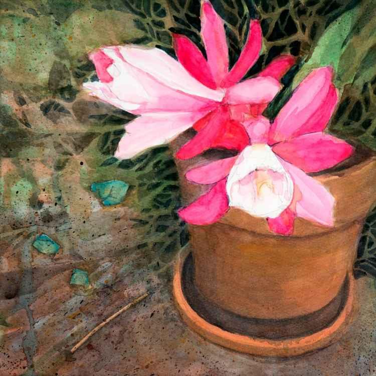 'Desert Rose -