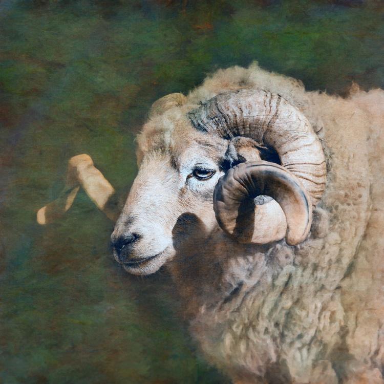 The Ram green - Image 0