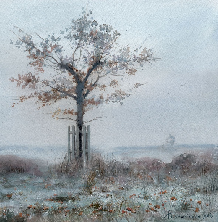 Frost in Richmond Park - Image 0
