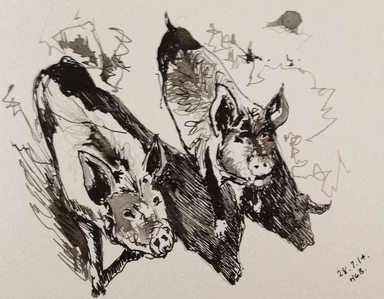Pigs -