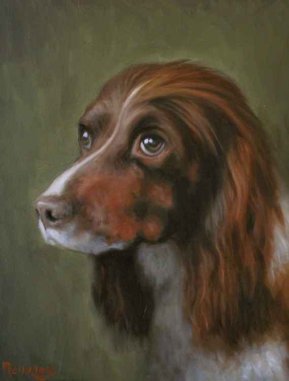 Pet Portraits -