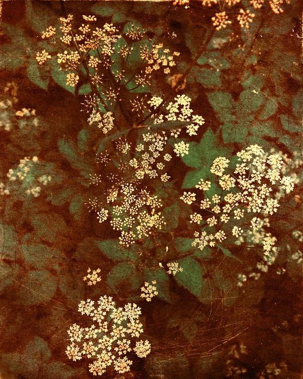 Gypsophila - Image 0