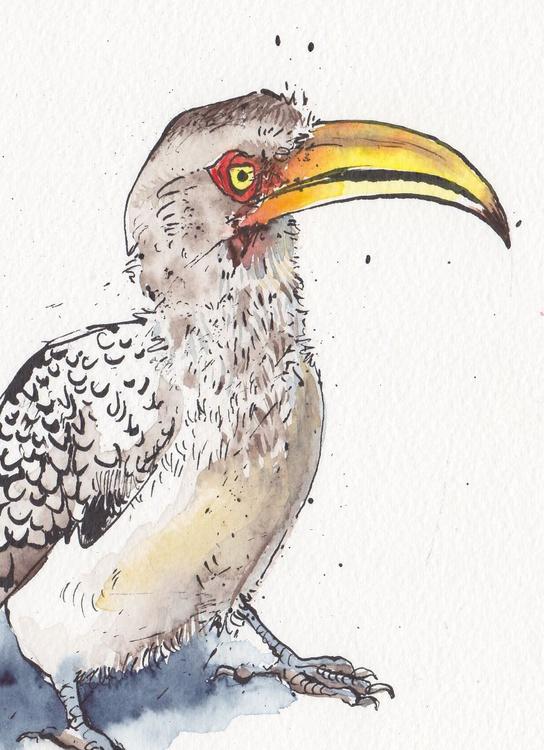 Southern Yellow billed Hornbill - Daily Bird #32 - Image 0