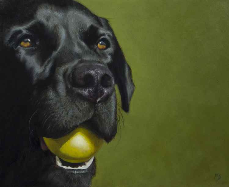 Lab and ball -