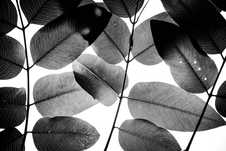 """""""Experiments with Leaves 2015 1"""" - Image 0"""