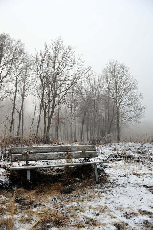 Resting on a Foggy Day - Image 0