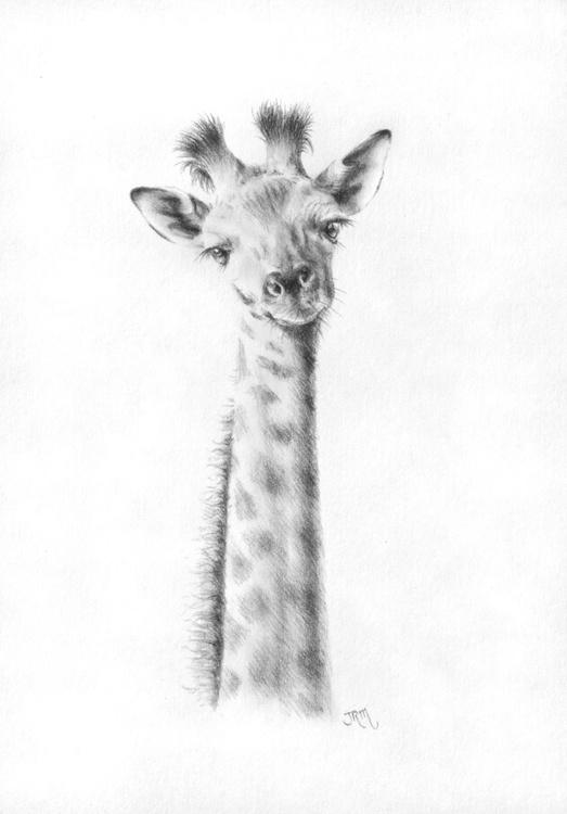 Baby Giraffe - Image 0