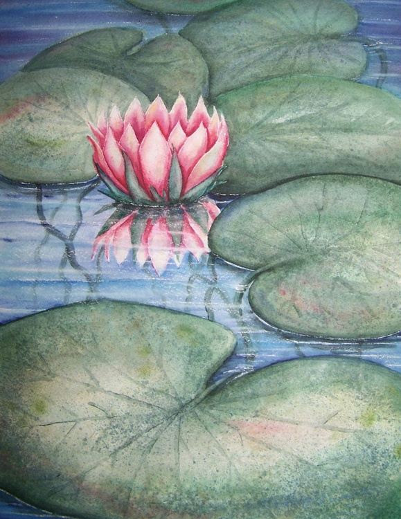 Pink Water Lilly - Image 0
