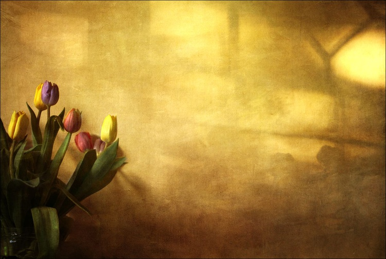 Tulips With Love - Image 0