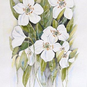 Lilium Casa Blanca (Lily) by Angela Rendall
