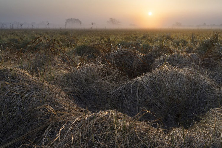 Meadow In Fog At Sunrise - Image 0