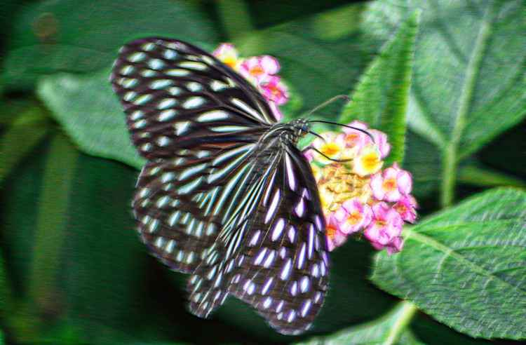 Butterfly 1 (Paper)