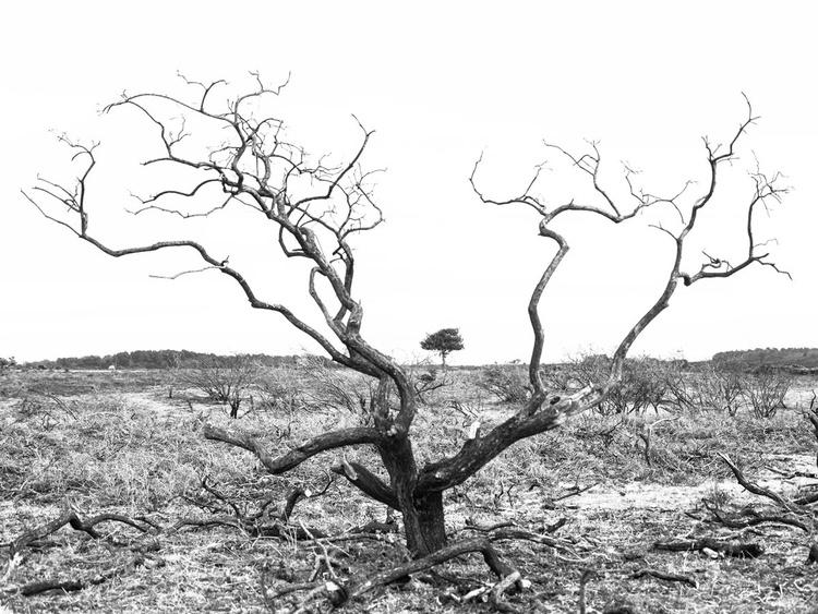 SKELETON TREE - Image 0