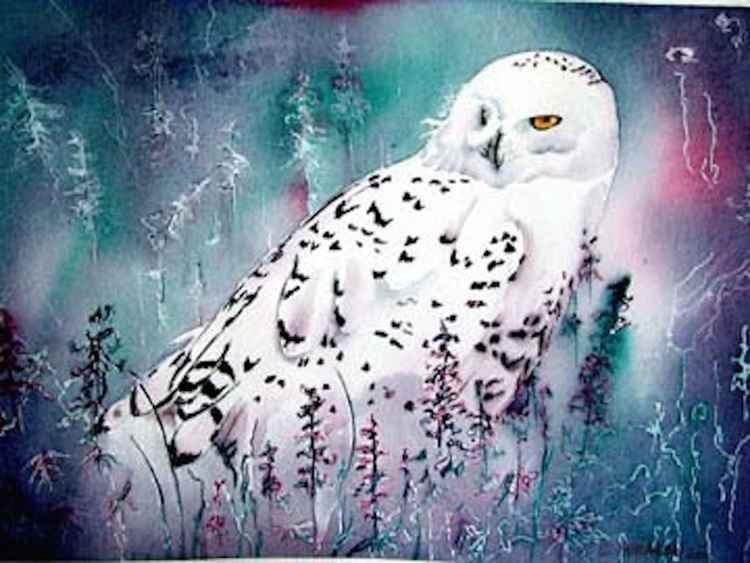 Snowy Owl -