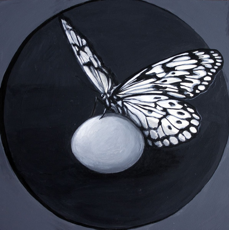 Butterfly with Egg - Image 0