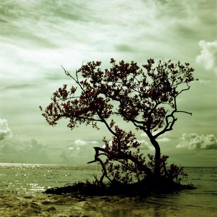 Mangrove Silhouette - Image 0