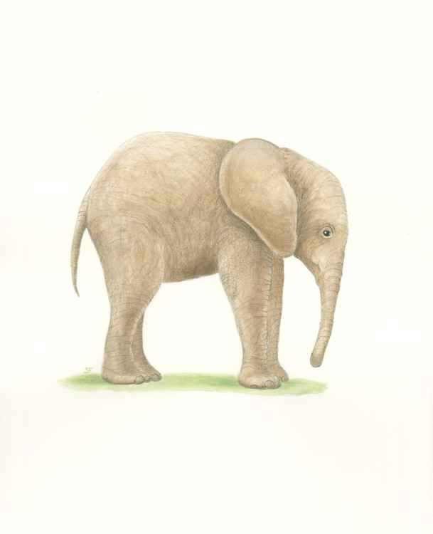 Little Lost Elephant