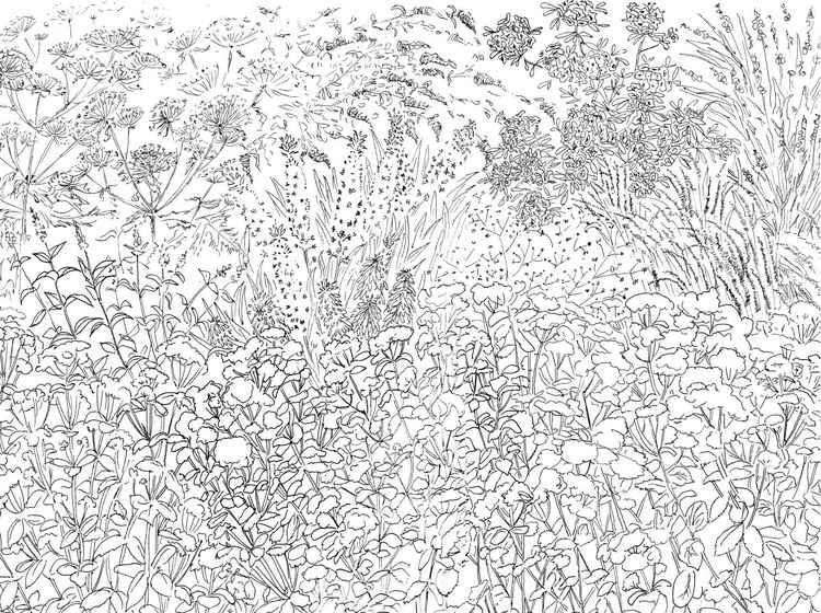 Sedum Garden -