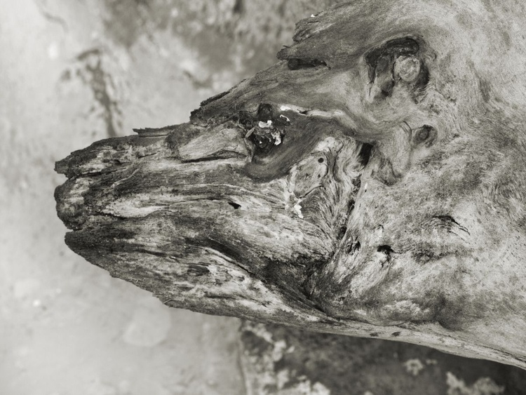 Wooden bear - Image 0