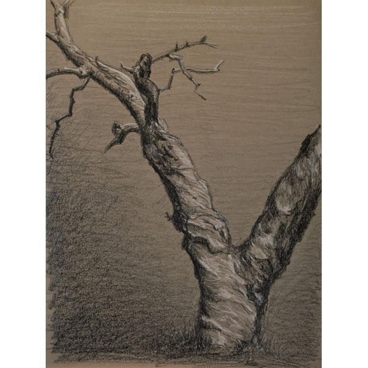 Old Tree - Image 0