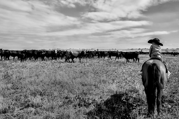 My Cattle - Image 0