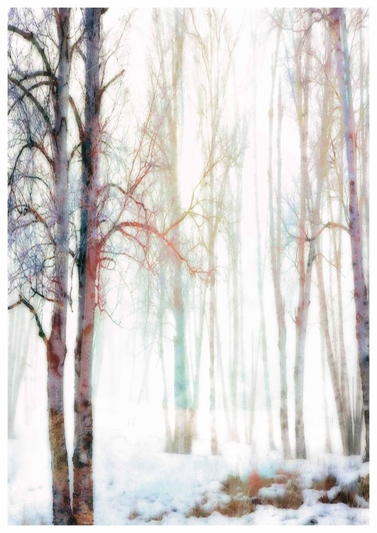A Winters Day - Image 0
