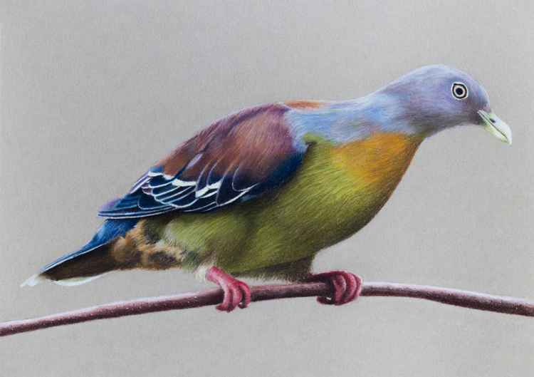 "Original pastel drawing ""Little green pigeon"" -"