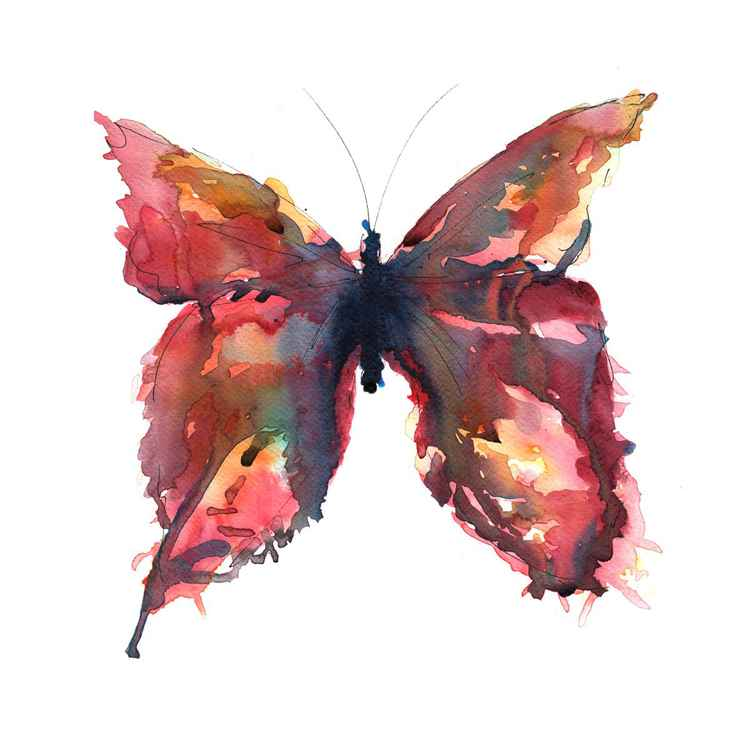 Pink Butterfly -