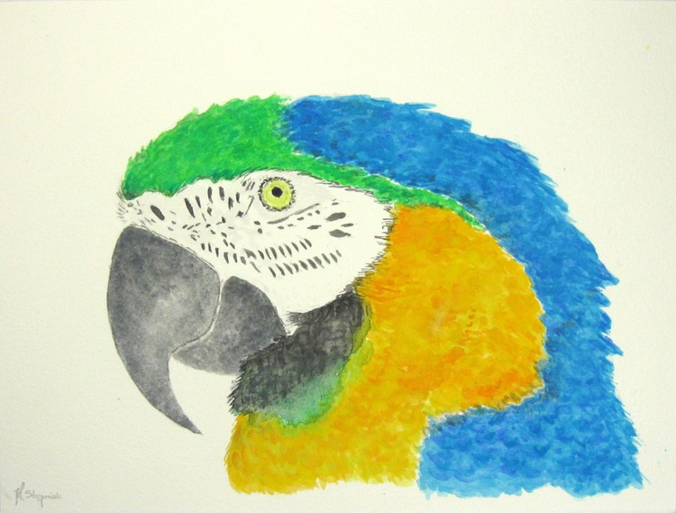The blue-and-yellow macaw (Ara ararauna), parrot portrait - Image 0