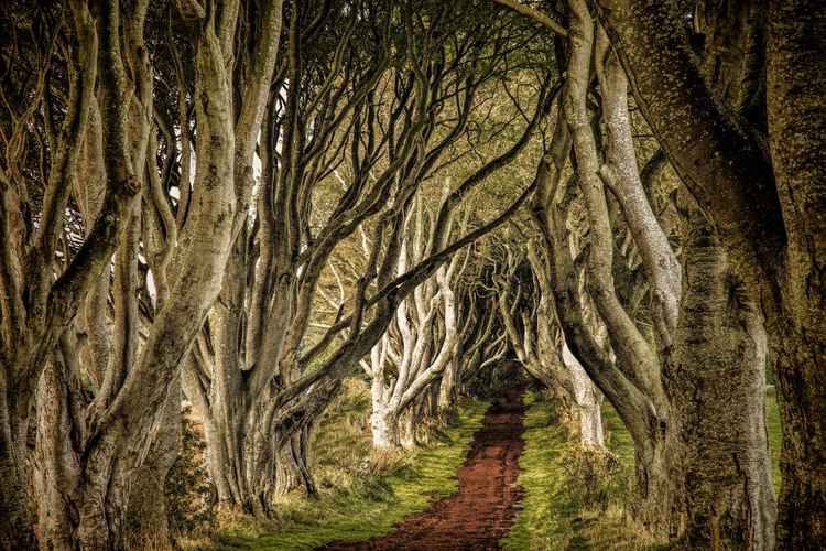 The King's Road -
