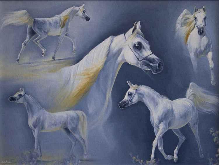 Arabian filly Aja Europa at Menton