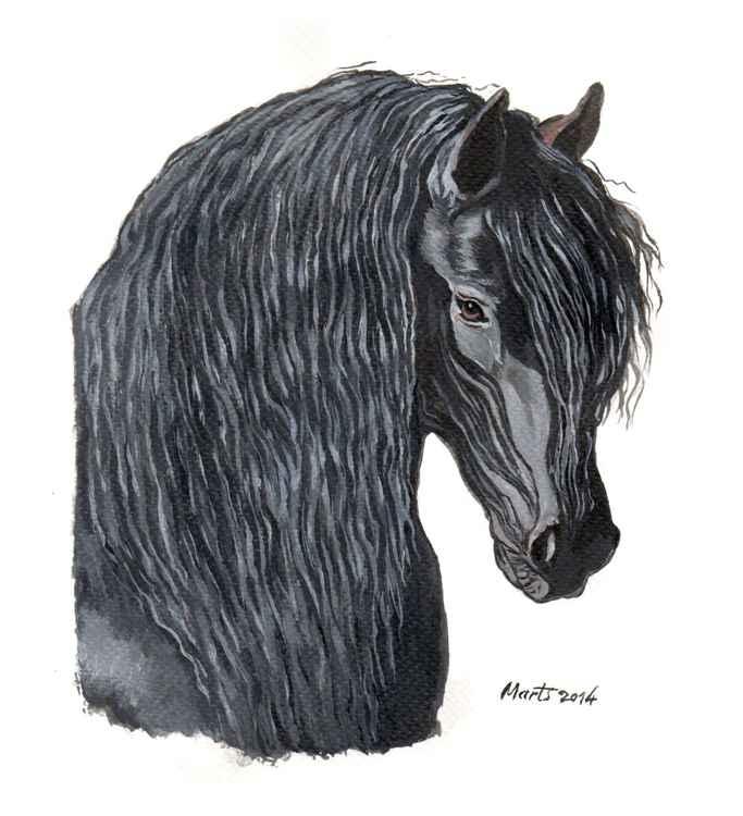 Friesian black horse head