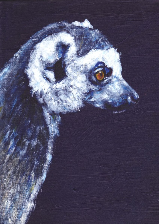 Ring Tailed Lemur - Image 0
