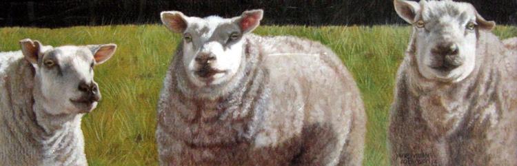 Silent Sheep - Image 0