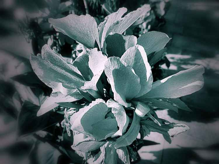 Flowers 02 post (2016) - Premium Poster Print - 28 x 21 cm - FREE SHIPPING