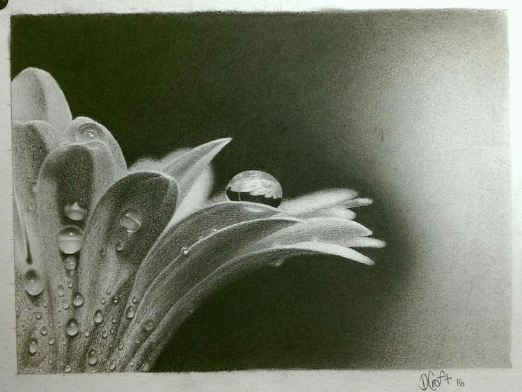 Flower after the rain - Image 0
