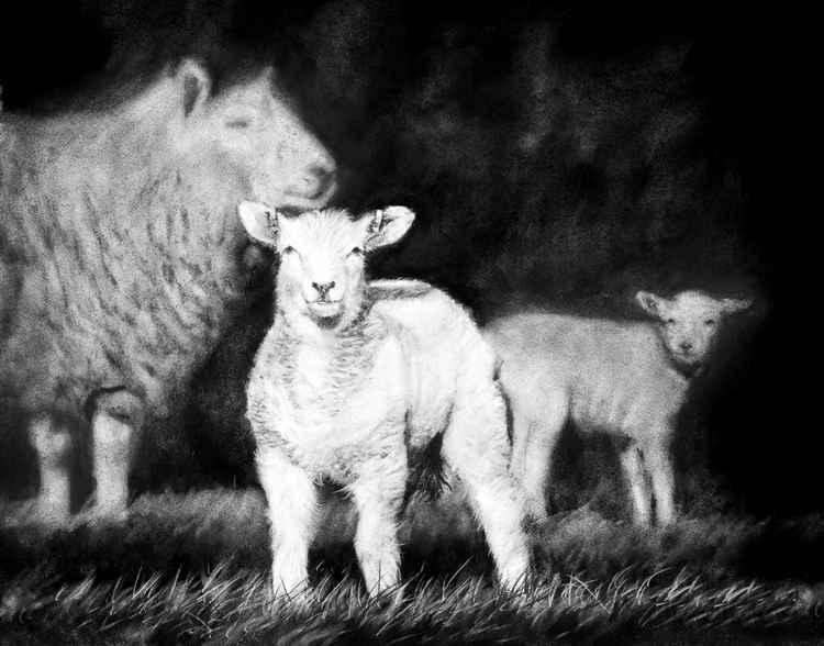 Lynn and Lambs