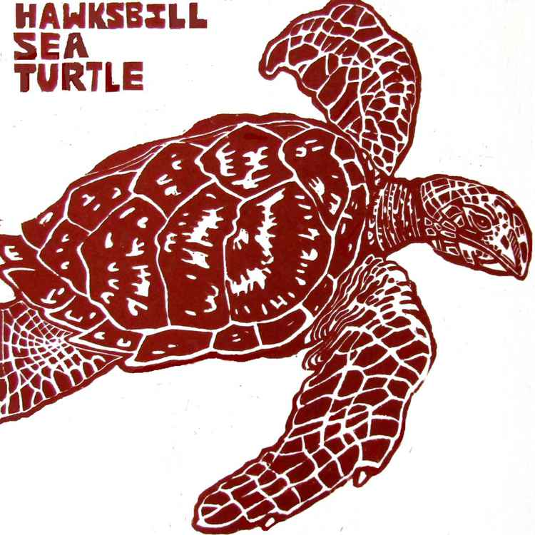 HAWKSBILL SEA TURTLE -