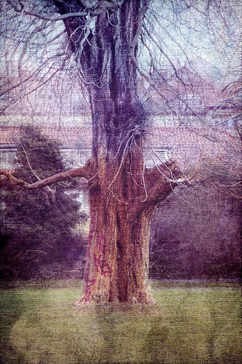 Tree #6 - Image 0