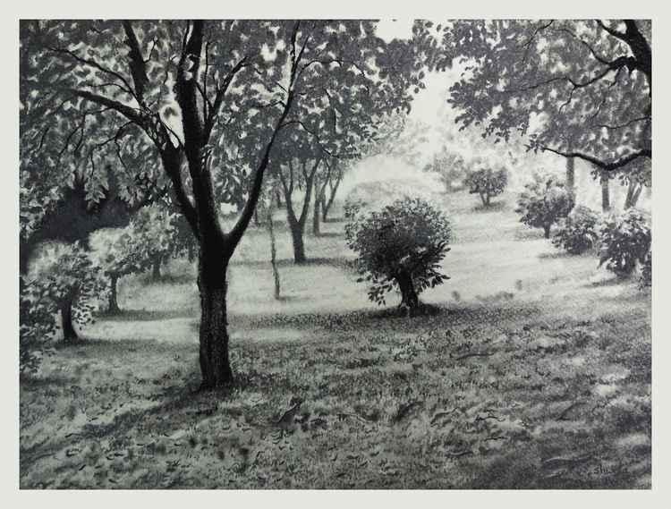 Moonlight Garden Charcoal Drawing -