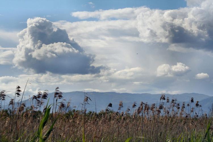 Canne e nuvole - Image 0