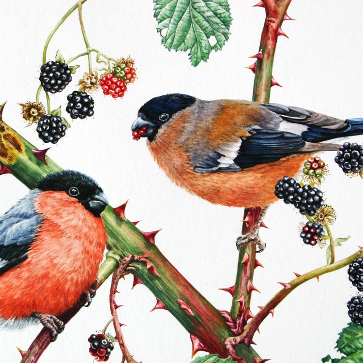 Bullfinches and Blackberries - Image 0