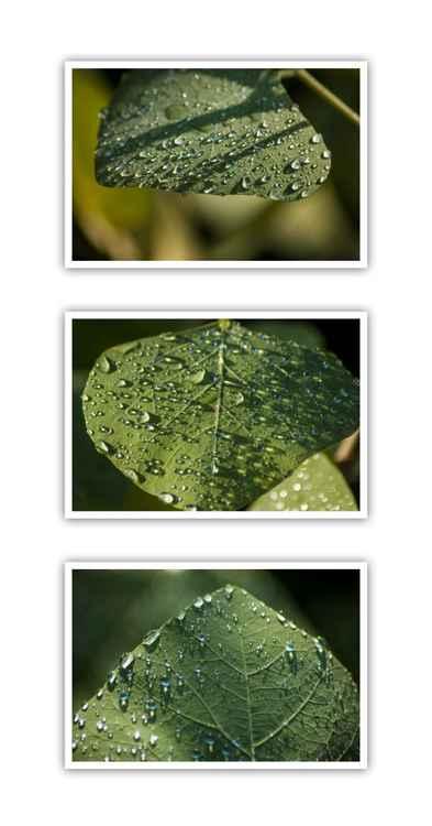 """Leaf Art #4"" triptych -  Limited Edition 1/75 (Small) -"