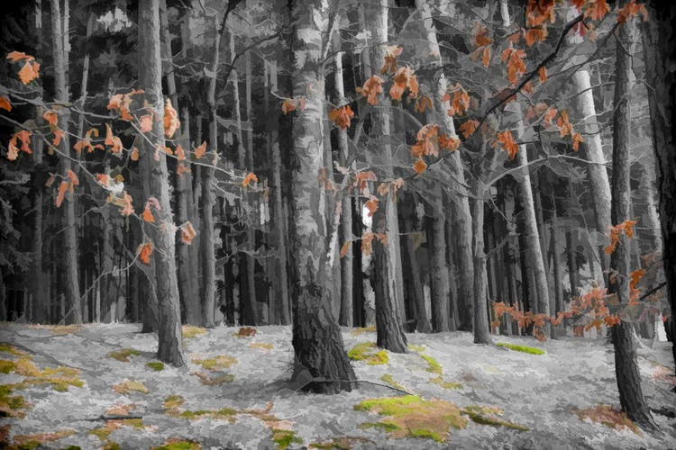 A hint of colour - Image 0