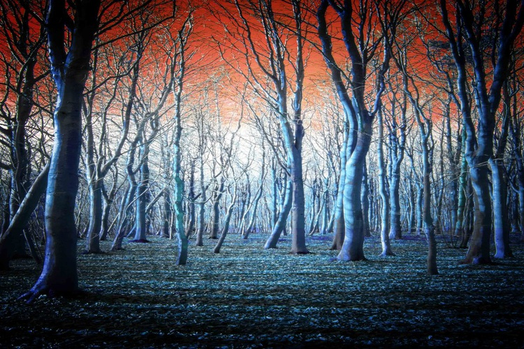 The Blue Forest - Image 0
