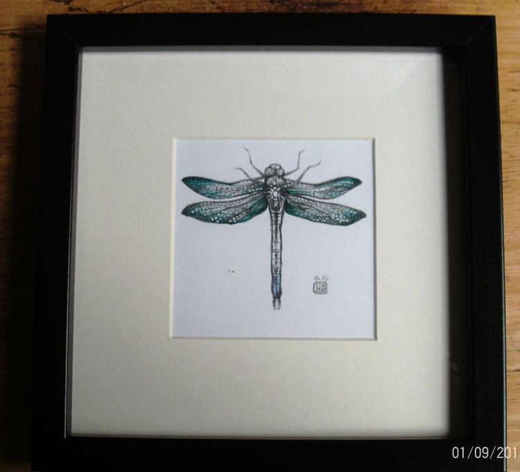 Dragonfly study 1. - Image 0